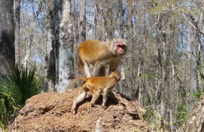 kayaking monkey tour