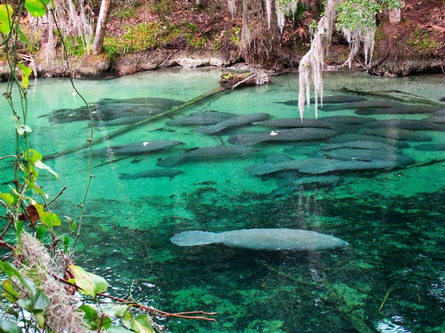 Blue Spring State Park Amazing Nature Florida
