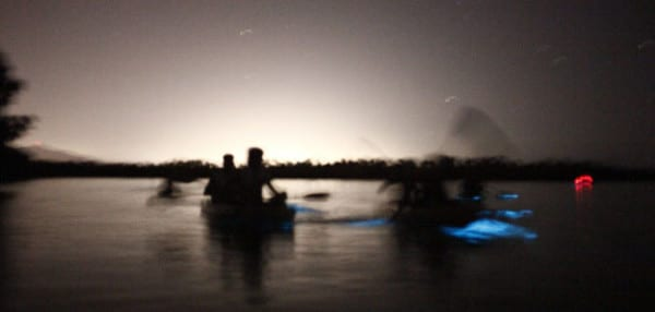 Florida Bioluminescence Kayaking and Ecotours