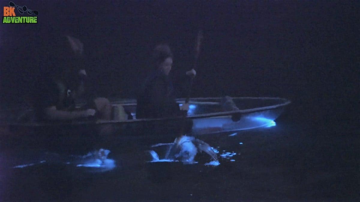 Florida Bioluminescent Kayaking in Clear Kayaks with BK Adventure