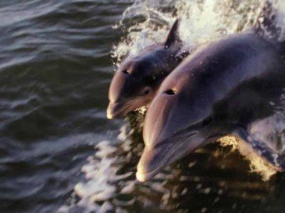 sunset kayaking dolphin tour titusville, Florida