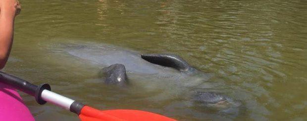 manatees kayaking tour orlando florida