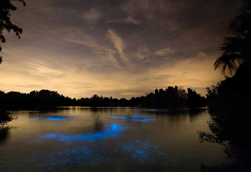 Bioluminescence in Florida - 33 Fun Facts and How to Go See
