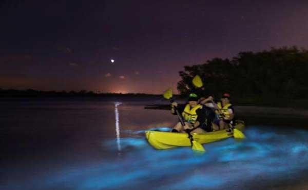 Florida Bioluminescence Kayaking Tour