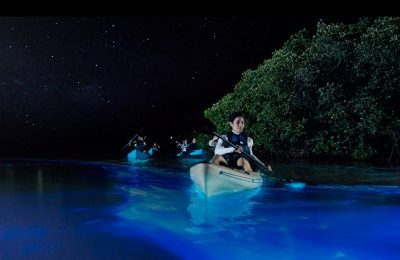 Florida bioluminescent kayaking tour - bioluminescence bay