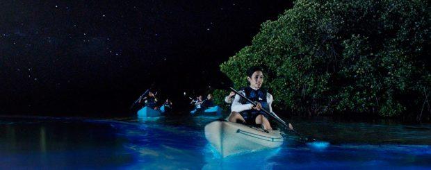 Florida bioluminescent kayaking tour - bioluminescence bay