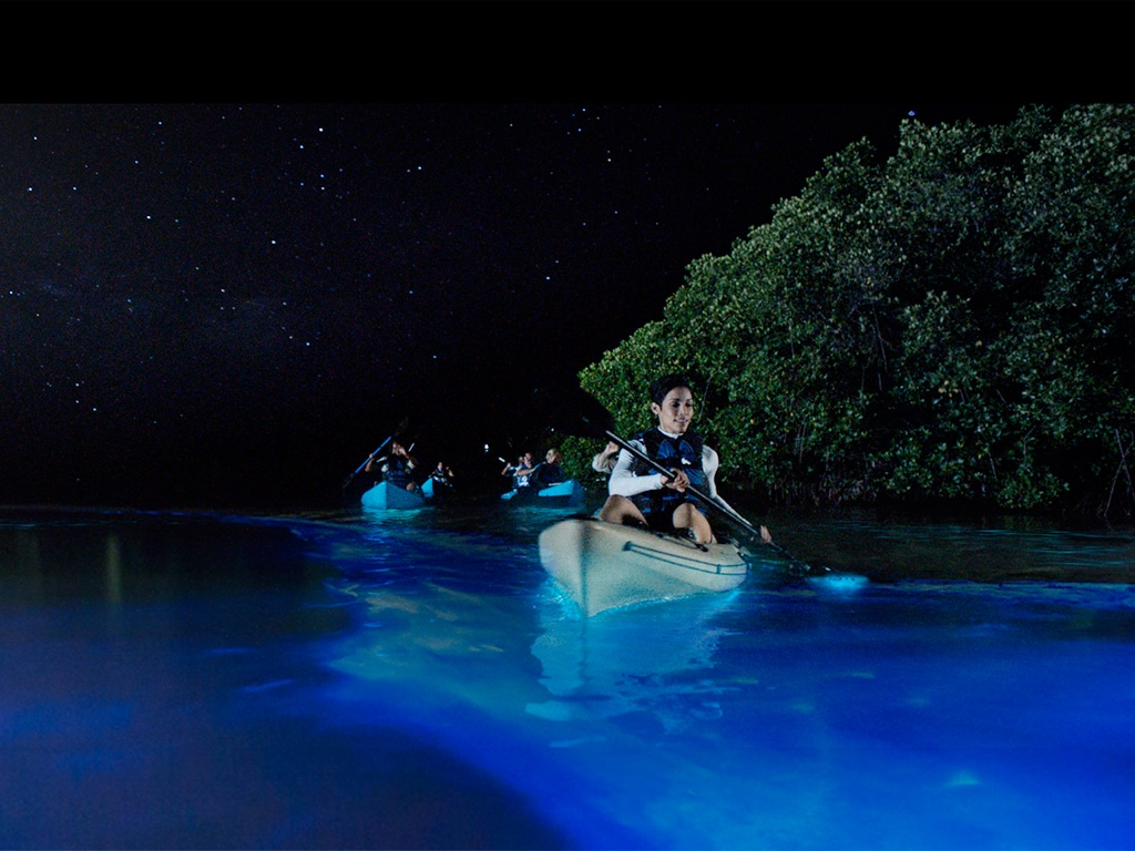 Florida Bioluminescence Kayaking Tours Florida S