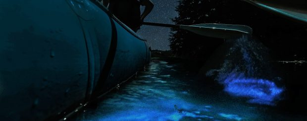 Bioluminescence Raft Tour Florida