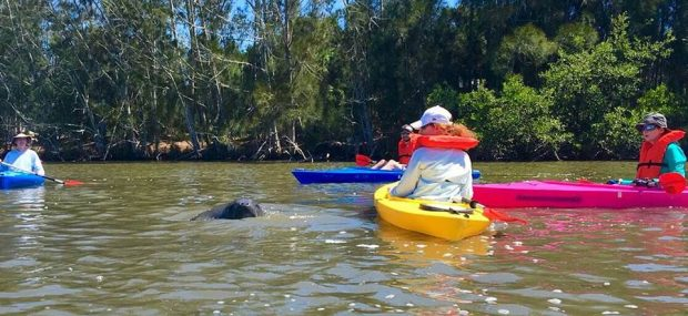 Florida Manatee Tour with BK Adventure