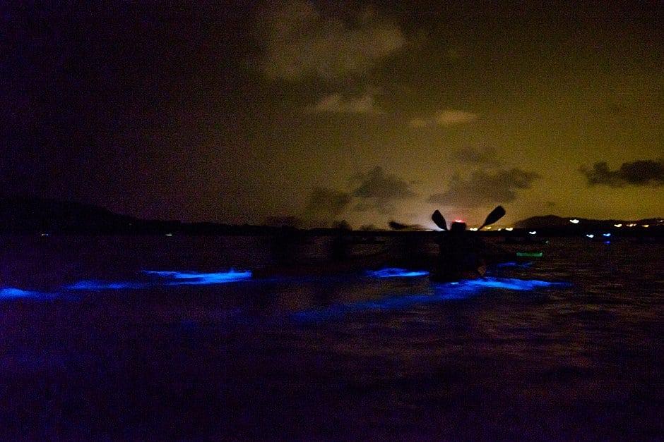 florida bioluminescence fun facts