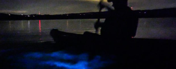 Bioluminescence Kayaking Tour in Florida