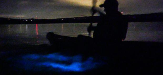 Bioluminescence Kayaking Tour in Florida