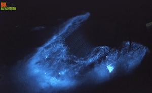Florida Bioluminescence Tour Comb Jelly Viewing