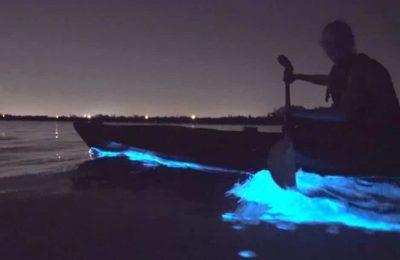 Florida Bioluminescent kayaking tour with BK Adventure 2019