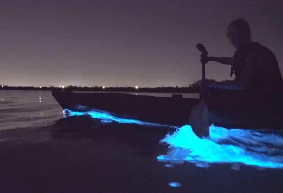 Florida Bioluminescent kayaking tour with BK Adventure 2019