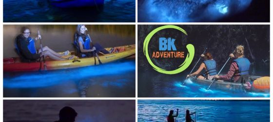 Summer Peak Bioluminescence Season in Florida