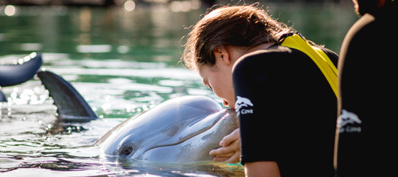 things to do in orlando #5 - discovery cove