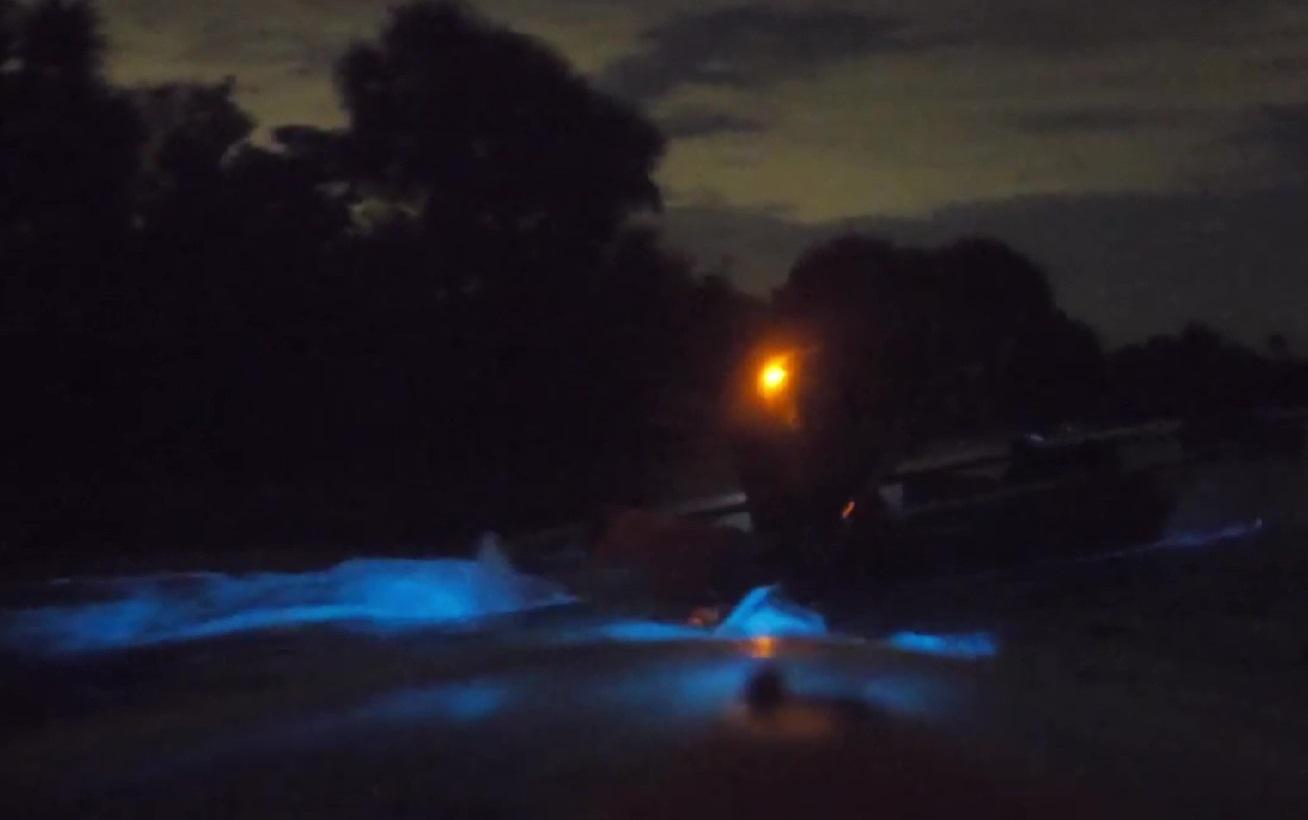 bioluminescence night kayaking