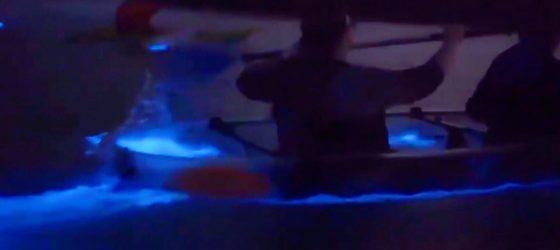 Clear Kayaks Bioluminescence Cocoa Beach Florida