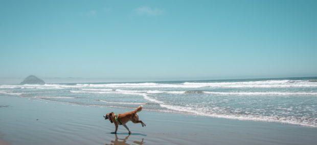dog on beach in florida